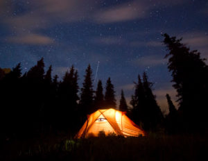 tent under trees and stars